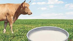 'Süt piyasası çöktü'