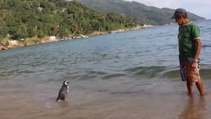 Brezilyalı yaşlı adam ile hayata döndürdüğü penguenin ilginç hikâyesi