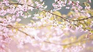 Modunuza göre bahar etkinlikleri