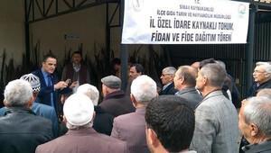 Simav'da cevize devlet desteği