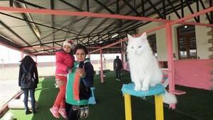 İranlı turistlerden Van kedilerine yoğun ilgi