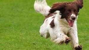 Köpekler neden fırlatılan her şeyi yakalamaya çalışırlar?