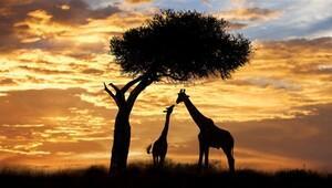Dünyanın en ünlü 3 Safari bölgesi