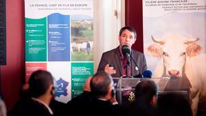 Fransa, yılda 1.4 milyon canlı sığır ihraç ediyor