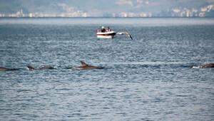 Yunuslardan sürpriz ziyaret