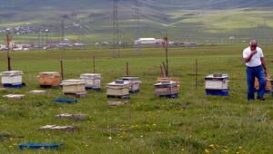 Yurda kaçak sahte Kafkas ana arı girişi yapıldığı iddiası