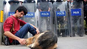 Sokak köpeğini seven protestocuya polise hakaretten ceza
