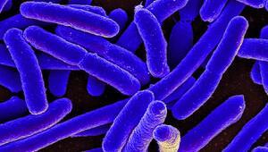 Korkutan gelişme: Tüm ilaçlara dirençli bakteri