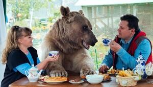 Bahçelerinde ayı besliyorlar!