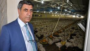 Prof. Dr. Çelik: Tavuk yemeyin demek doğru değil