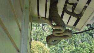 Beş metrelik davetsiz misafir korku dolu anlar yaşattı