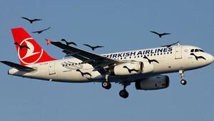 THY uçağı kuş sürüsüne çarpınca 4 uçak pas geçti