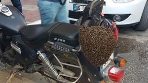 Firari arılar şehir merkezine indi