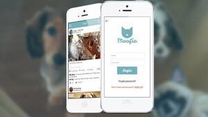 Artık hayvanların da bir sosyal ağı var