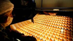 Yumurta ihracatı arttı