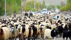 Türkiye'nin tek canlı hayvan fuarı Aydın'da