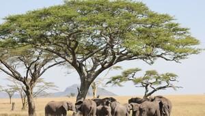 Vahşi yaşama yolculuk: Serengeti Milli Parkı