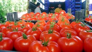 Denizli'den domates ihracatı
