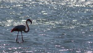 Baharın müjdecileri Kuş Cennetine geliyor