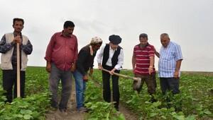 Kılıçdaroğlu, Adana'da çiftçiler ve temsilcileriyle buluştu (5)