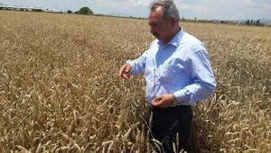 CHP'li Nurlu: Çiftçiye yine bayram müjdesi yok