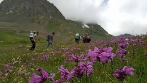 Dağcılar, Temmuz ayında buzlarla kaplı Kaçkarlara zirve yaptı