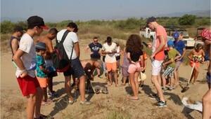 Kuşadası'nda 1 ayda 6 deniz kaplumbağası telef oldu