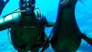 Koç'un anısına yaptırılan su altı heykeli törenle denize indirildi - ek fotoğraf