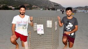 Patara Plajında 195 caretta yuvası korunuyor