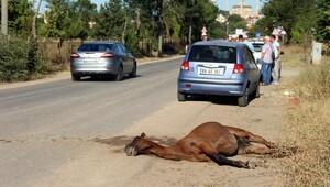 Otomobilin çarptığı at telef oldu