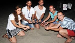 Caretta yavruları Patarada Akdenizle buluşuyor