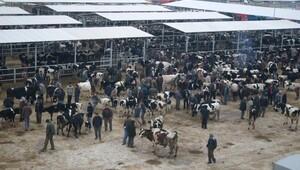 Ödemiş'teki hayvan pazarı açılıyor