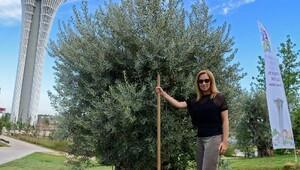Lara Fabian konser öncesi zeytin ağacı dikti