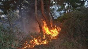 Mudanya'da çıkan yangında 10 dönüm orman alanı zarar gördü