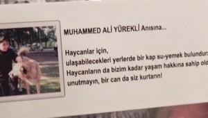 Muhammed Ali'nin mevlit yemeği 'haycanlar'a su- yemek kabı oldu