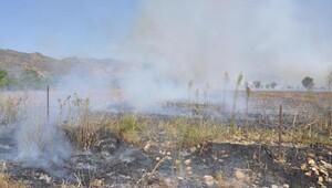 Anız ateşi ağaçları yaktı