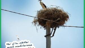 Yeni yapılan elektrik nakil hatlarına 'kuşları koruma' zorunluluğu