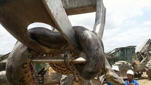 Dev yılanın görüntülerine sosyal medyada tepki