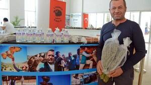 Lisinia'nın aromatik ürünleri Expo 2016'da