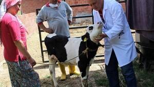 Pamukkale'de 3 ayda 6 bin 730 hayvana ücretsiz muayene
