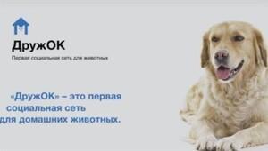 Rusyada köpekler için Facebook geliyor