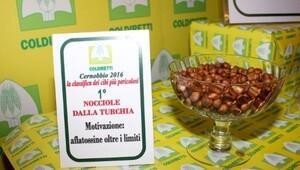 İtalyada en tehlikeli gıdalar listesinde Türk fındığı ilk sırada