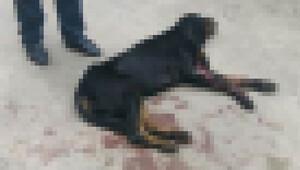 Köpeğini korurken baba-oğlu vurdu