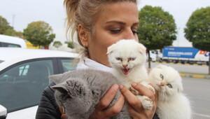 Gümrükten ihale ile satılan kedilerin 5i öldü