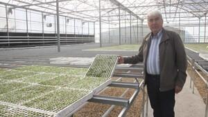 Kooperatiften çiftçilere yerli fide üretimi