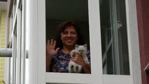 Kapıkulede yakalanan 15 kediye satılana kadar evinde bakacak