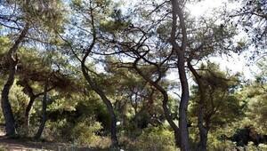 Muratpaşadan Obruk Ormanı talebi