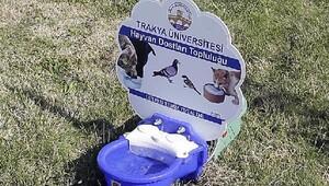 Trakya Üniversitesinde sokak hayvanlarına yemlik ve suluk