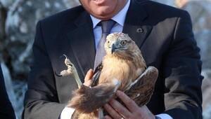 Burdurda tedavi edilen leylek, şahin ve pelikan doğaya salındı