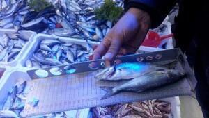 5 ilde bin 772 kilo balığa el konuldu